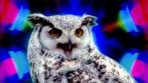 MotionReel-Owl
